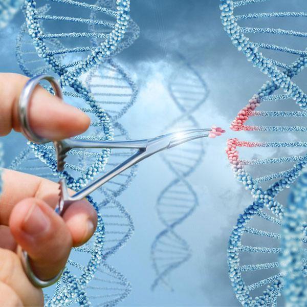 Tiêm tế bào gốc giúp tái tạo nang lông, từ đó kích thích mọc tóc
